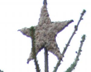 star for the top - frame of sticks plastered with fat, push in seeds, sultanas,nuts